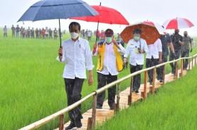 Pantau Langsung Panen Raya di Indramayu, Jokowi: Hasilnya…