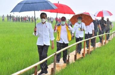 Pantau Langsung Panen Raya di Indramayu, Jokowi: Hasilnya Bagus