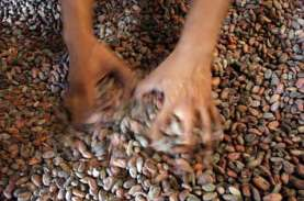 Ekspor Kakao Fermentasi dari Bali Tak Sekuat Produksi…