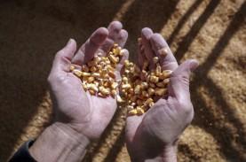 Efek Impor China dan Rendahnya Panen, Harga Jagung…