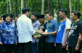 Jokowi Geber Perhutanan Sosial 1,2 Juta Ha di Riau, Dinas LHK: Libatkan Kami!