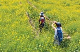 Jalur Jeju Olle, Rekomendasi Tempat Hiking Indah di Korea Selatan