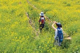 Jalur Jeju Olle, Rekomendasi Tempat Hiking Indah di…