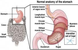 Kadar Gula Darah Tinggi Picu Gastroparesis, Apa Itu?