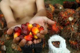 Harga Sawit Riau Pekan Ini Tembus Rp2.500 per Kg