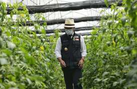 Ridwan Kamil Luncurkan Kawasan Agrowisata Cipendawa Cianjur