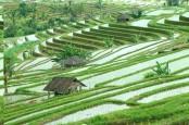 Pertumbuhan Sektor Pertanian di Bali Perlu Disokong Teknologi