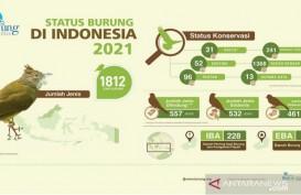 Duh! 179 Jenis Burung di Indonesia Terancam Punah