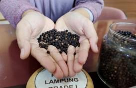 Nilai Ekspor Pertanian Lampung Kuartal I Rp4 Triliun