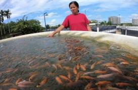 Peternak Ikan di Bali Mulai Pakai Sistem Bioflok