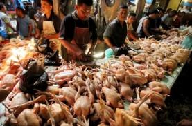 Tren Kenaikan Harga Daging Ayam dan Babi di Bali Dorong…