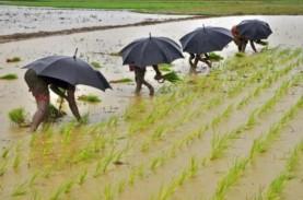 Sentil Impor Beras, Fadli Zon Sebut Sektor Pertanian…