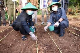 Lindungi Petani Jagung, Kabupaten Bandung Kembangkan…