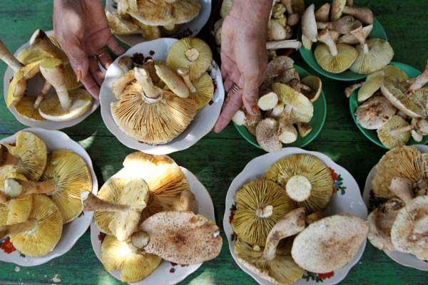 Ilustrasi beberapa jenis jamur. Studi laboratorium sebelumnya telah menunjukkan bahwa jamur memiliki efek antikanker.  - ANTARA/Jojon