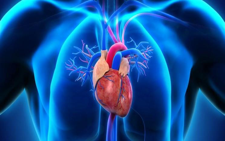Kardiovaskular - istimewa