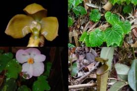 Yuk Mengenal 8 Spesies Baru Tumbuhan Unik Indonesia