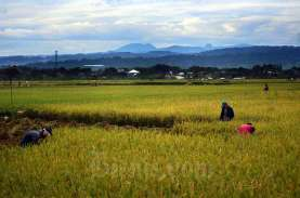 Program Ketahanan Pangan Kabupaten Bandung akan Dievaluasi