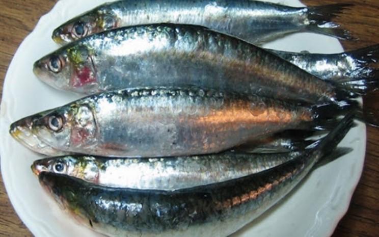 Ikan sarden - istimewa