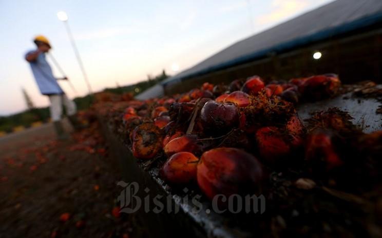 Petani membawa kelapa sawit hasil panen harian di kawasan Pangkalan Bun, Kalimantan Tengah, Rabu (11/5). Bisnis - Nurul Hidayat