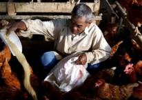 Pekerja memberikan pakan ternak./JIBI-Nurul Hidayat
