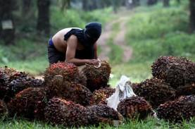 Harga Sawit Riau Jelang Lebaran Terus Naik
