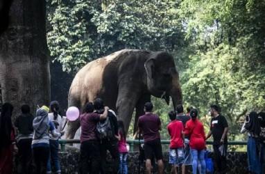 Libur Lebaran, 2.460 Pengunjung Datangi Taman Margasatwa Ragunan