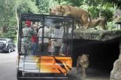 Gembira Loka Zoo Tambah Koleksi Hewan Tarik Minat Berkunjung