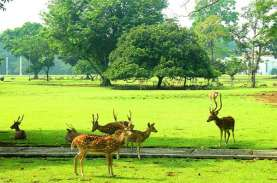 Kebun Raya Bogor Sediakan Layanan Tes GeNose bagi…