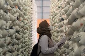 Stok 2021 Aman, Komisi IV DPR: Tak Ada Alasan Impor…