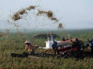 Produksi Dalam Negeri Meimpah, Pemerintah Pastikan Tidak Akan Impor Beras Pada Tahun Ini