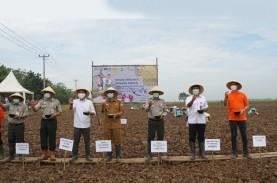Holding Pangan Ditarget September, 6 BUMN Bakal Merger