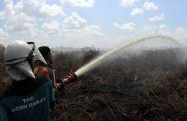 Deforestasi Turun 75 Persen, TFA: Berkat Andil Swasta dan Pemerintah
