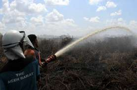 Deforestasi Turun 75 Persen, TFA: Berkat Andil Swasta…