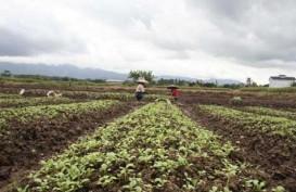 Ini Rekomendasi untuk Tantangan Agri-food Indonesia Pasca Pandemi