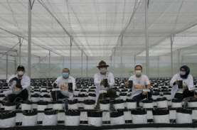 Konsep Smart Farming untuk Petani Milenial Terbukti…
