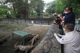 Kebun Binatang Surabaya Kembali Bergeliat