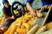 Sengketa Impor Ayam, Alternatif Pakan Ternak Perlu Dicari