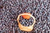 Buah-buahan untuk Menurunkan Tekanan Darah Tinggi