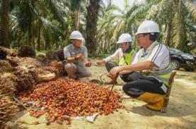 Cargill Bangun Pabrik Kelapa Sawit di Lampung Rp2,86…