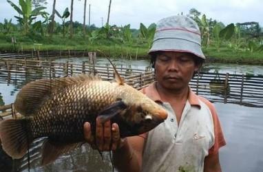 Menteri KKP: Budi Daya Ikan Bisa Entaskan Kemiskinan