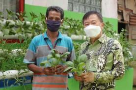 Petani Binaan Korindo Panen Sayuran Hidroponik