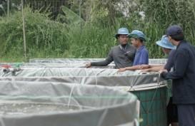 Mengintip Pelatihan Budi Daya Ikan Petani Milenial