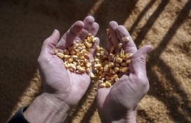 Harga Pangan Global Melonjak, Sentuh Rekor Tertinggi dalam 1 Dekade