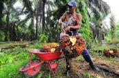 Alhamdulillah! Petani Sawit Swadaya Riau Bakal Punya Standar Harga