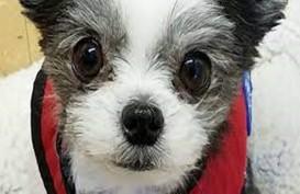 Kenalan dengan Gizmo, Anjing Lucu Penjaga Kesehatan Mental Anak di Masa Pandemii