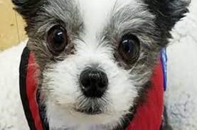 Kenalan dengan Gizmo, Anjing Lucu Penjaga Kesehatan…