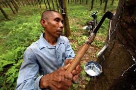 Harga Karet Riau Pekan Ini Fluktuatif, di Rohil Naik Rp1.000 per Kg