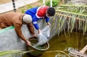 Pertamina Dumai Bantu 4.500 Bibit Ikan Gurami Bagi Nelayan Purnama