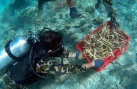 PLN dan Halu Oleo Lakukan Transplantasi Terumbu Karang di Perairan Konawe Selatan