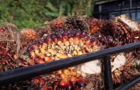Nasib Emiten Kebun Usai Harga CPO Mendingin